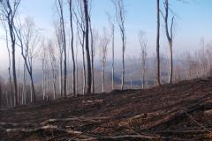 16-Посечена шума на падини Кобиље главе
