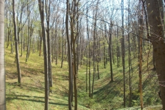 22-Пут кроз тек олисталу шуму