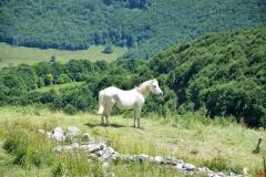 Planinarski tabor Grbaja - Prokletije 2017